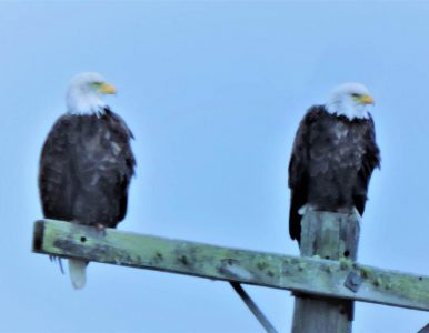 Why? philosophical dialogues with 1 child and 2 eagles