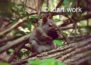 indépendance de l'écureuille