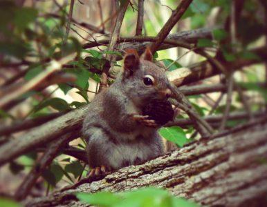 Dialogue existentiel 4: l'indépendance de l'écureuille